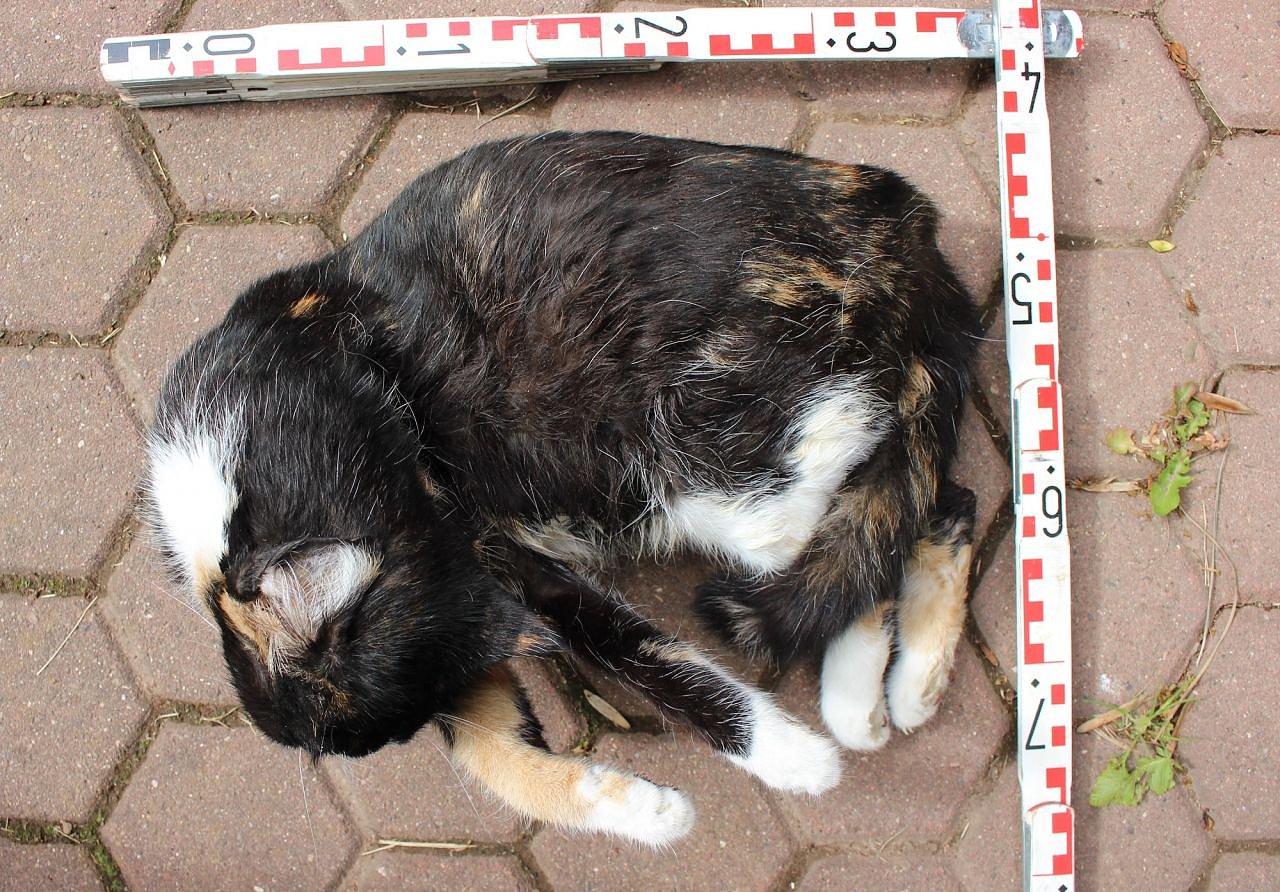 Tote Katze Melden